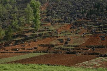 Campesinos trabajndo lo que eran sus tierras